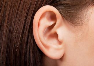 身体最不抗冻部位是哪个部位 为什么耳朵最不抗冻