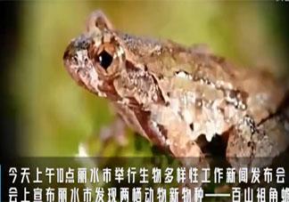 丽水发现全球新物种百山祖角蟾是怎么回事 百山祖角蟾是什么物种