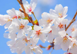 2021幼儿园立春节气活动美篇总结 幼儿园立春节气新闻稿三篇