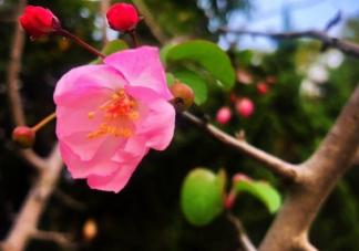 熬过冬天迎接春天句子 寒冬过去就是春天心情说说