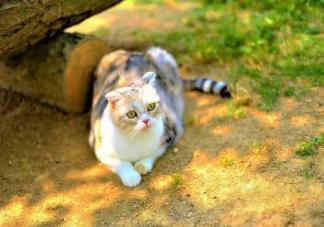 养猫对主人身体有什么好处 猫送人为什么要给钱