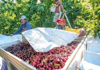 吴尊友回应车厘子等进口水果怎么吃 购买进口水果时要注意什么