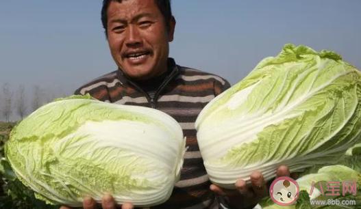 2021年白菜为什么突然涨价了 白菜什么时候降价