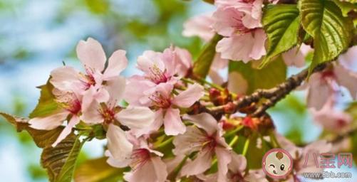 2021天气回暖注意事项 春季养生小技巧
