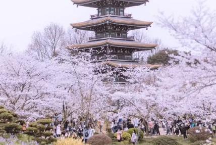 2021武大赏樱游客从哪个门进最好 游客通道两次核验点