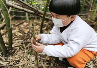 幼儿园植树节种树的活动报道美篇2021 幼儿园组织小朋友种树的活动稿件2021