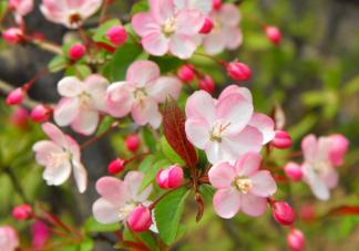 2021南北方花粉时间表 外出怎么预防花粉过敏