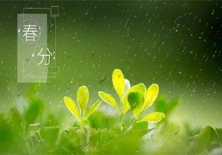 又是一年春分时节发朋友圈祝福语 又到春分节气的朋友圈说说大全
