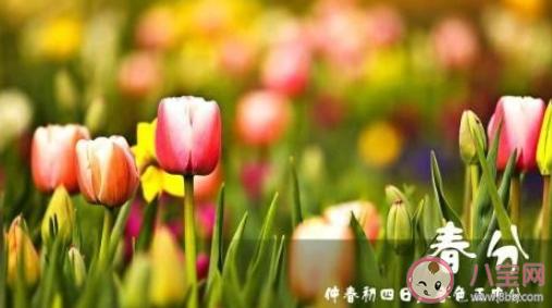2021今日春分祝福语说说 今日春分祝福句子带图