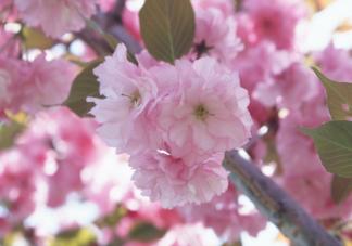 花粉过敏高发时间段什么时候 花粉过敏防治手册