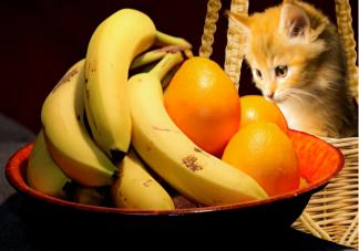 猫咪可以吃水果吗 猫咪可以吃哪些水果