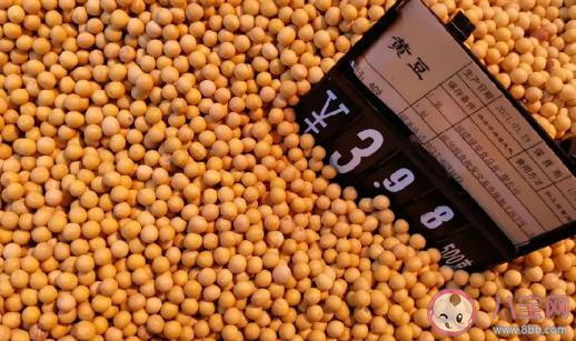 玉米价格为什么大涨 玉米价格何时恢复正常 投稿 第1张