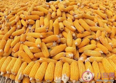 玉米价格为什么大涨 玉米价格何时恢复正常 投稿 第3张