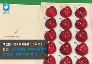 日本青森樱桃一颗3万日元 日本还有哪些天价水果