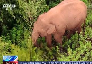 云南大象会不会吃到毒蘑菇 怎样分辨蘑菇有没有毒