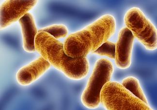炭疽是什么疾病 感染炭疽病后都有哪些症状
