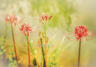 九月你好祝福语图片句子2021 九月最美祝福图片说说2021