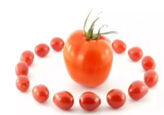 大小番茄哪个热量更高 小番茄大番茄哪个更有营养