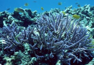 你好生活为什么要求素颜种珊瑚 防晒霜对珊瑚有何危害
