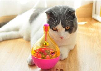 外出时间长如何安排猫的吃喝 把猫咪留在家中独处要准备什么