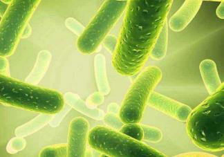 益生菌为什么要上天 益生菌在太空站会发生什么变化有什么不一样