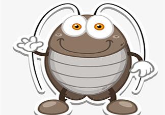 为什么不推荐用脚踩死蟑螂 蟑螂怎么消灭最好