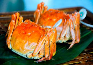 梭子蟹为什么没有大闸蟹卖的火 大闸蟹和梭子蟹有什么区别