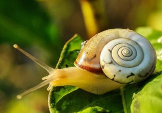 蜗牛爬过的地方往往会有一条黏液有啥用 蚂蚁庄园10月23日正确答案